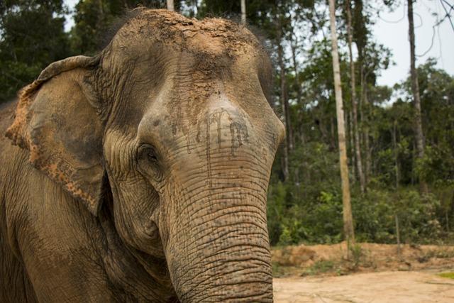 Elephant, Nature, Animal, Safari, The National Park