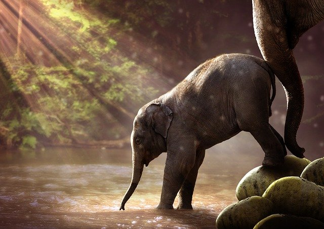 Elephant, Young, Watering Hole, Young Elephant, Animal