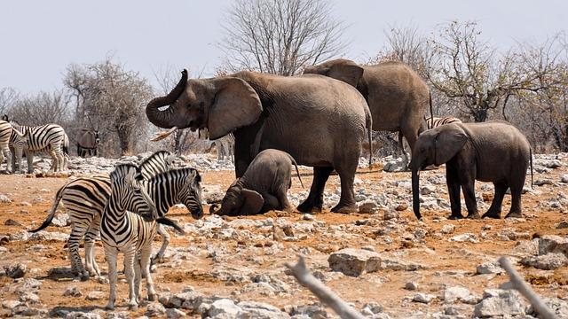 Elephant, Zebra, Africa, Namibia, Nature, Dry, Heiss