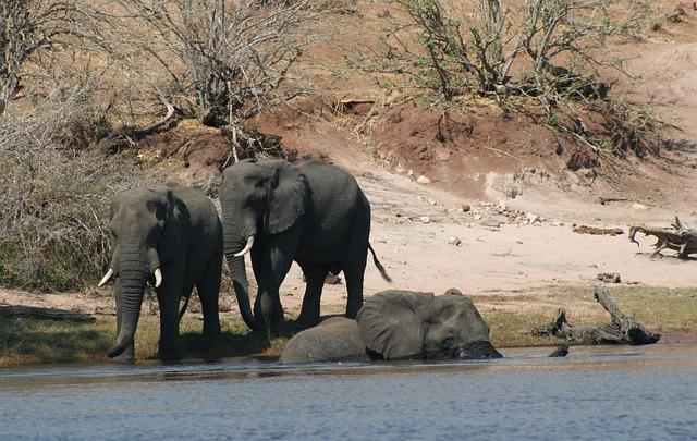 Mammals, Animals, Elephants, Elephants Crossing River