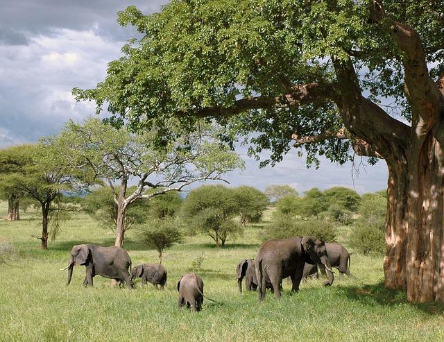 Elephant, Elephants, Tanzania, Safari, Animal, Wildlife
