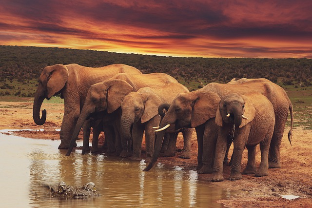 Elephants, Sky, Clouds, Crocodile, Water, Animals