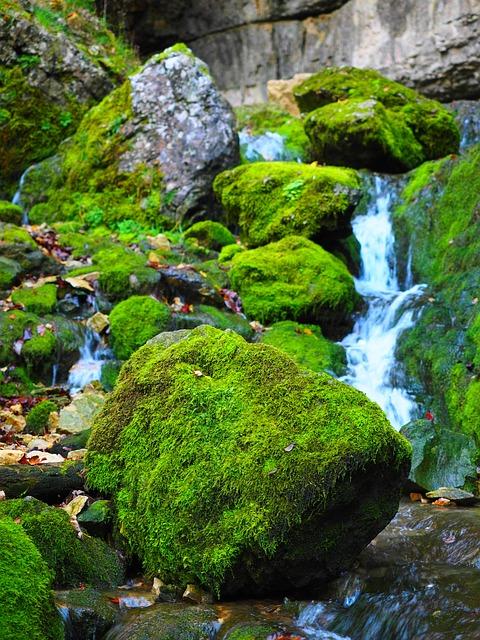 Elsach, Bach, Moss, Nature, Falkensteiner Cave