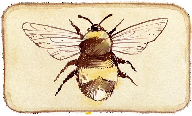 Bee, Scrapbooking, Embellishment, Tag, Watercolor