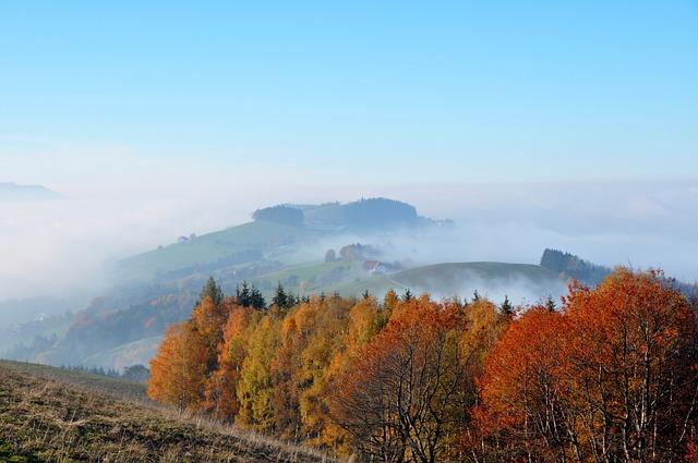 Autumn, Autumn Mood, Colorful Leaves, Emerge
