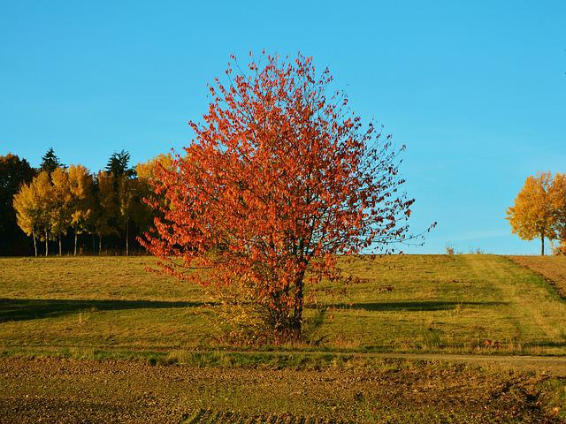 Autumn Tree, Autumn, Landscape, Emerge, Fall Color