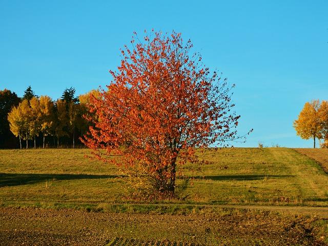 Autumn Tree, Autumn, Landscape, Emerge, Fall Color