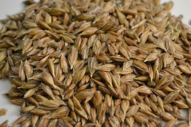 Emmer, Wheat, Grains