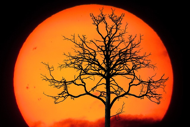 Nature, Landscape, Tree, Winter, Sun, Sunset, Emotions