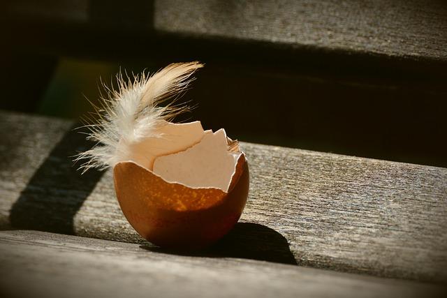 Egg, Hen's Egg, Eggshell, Empty, Brown Egg, Shell, Open