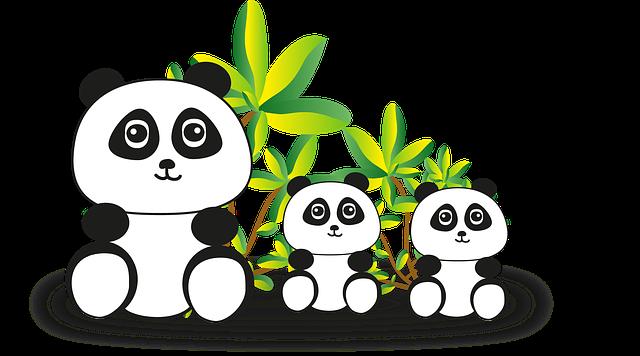 Panda, Panda Bear, Bear, Endangered, China