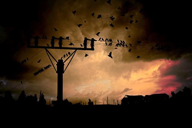 Strommast, Current, Energy, Energy Supply, Birds