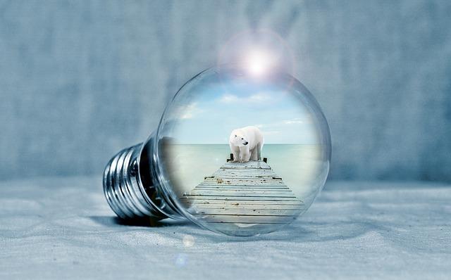 Light Bulb, Polar Bear, Web, Sea, Light, Energy