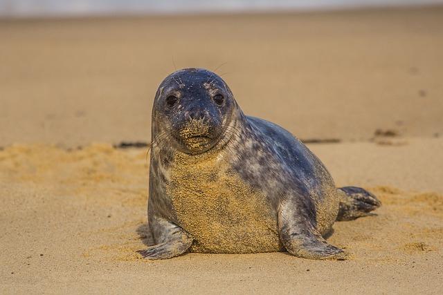 Seal Cub, England, Beach