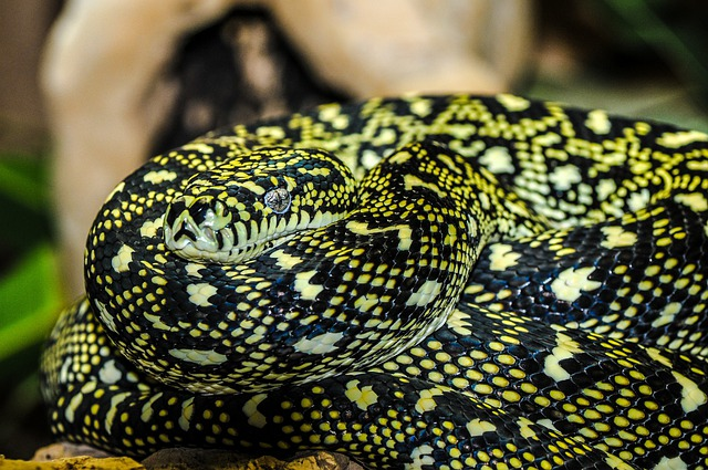 Snake, Zoo, Macro, Animal, Enlarge View, Wild