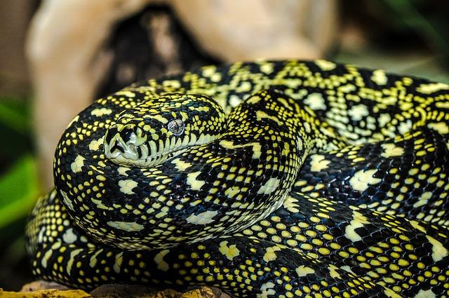 Snake, Zoo, Macro, Animal, Enlarge View, Wild