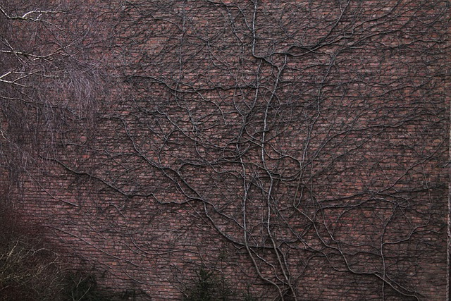 Wall, Tree Roots, Entwine, Facade, Background