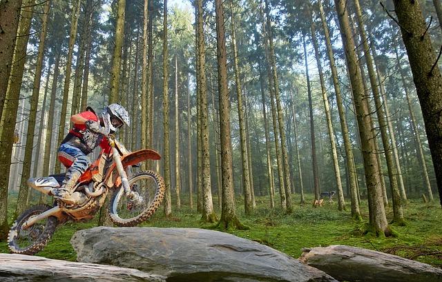 Wood, Tree, Nature, Adventure, Motorcycle, Environment