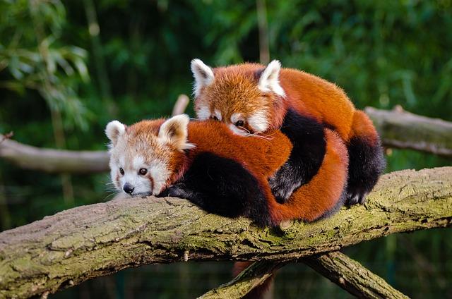 Animal, Cuddle, Cute, Environment, Fur, Furry