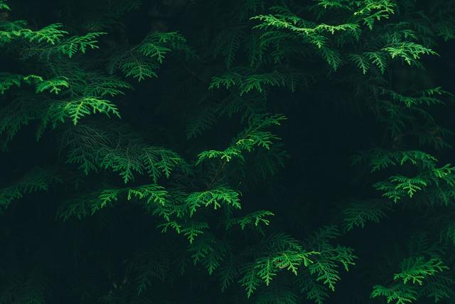 Conifers, Coniferous, Evergreen, Green, Environment