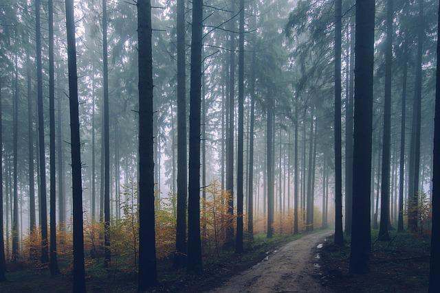 Forest, Path, Conifer, Environment, Fall, Fog, Haze
