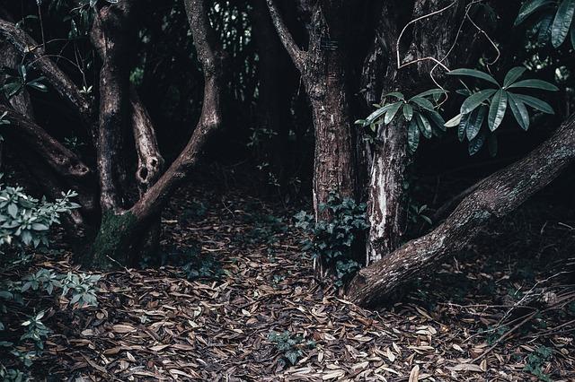 Dark, Dry Leaves, Environment, Forest, Landscape