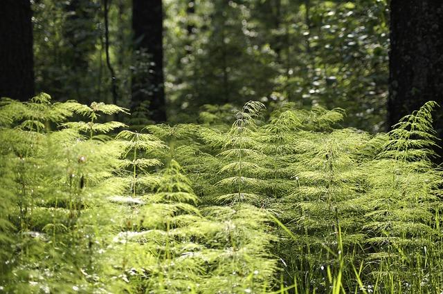 Forest, Vegetation, Environment, Greenery, Leaves