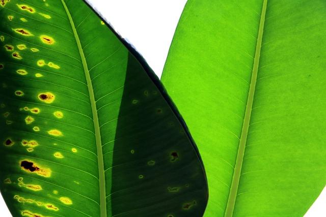 Plants, Leaf, Leading, Nature, Environment, Garden