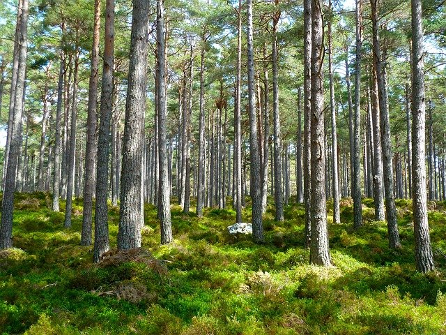 Forest, Trees, Ecology, Environment, Landscape, Plants