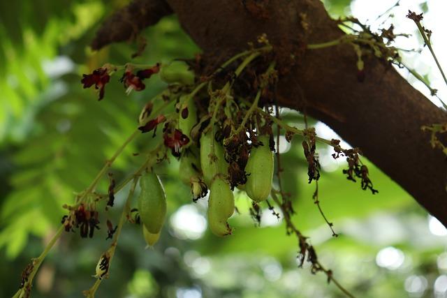 Bilimbi, Nature, Tree, Green, Environment, Leaves