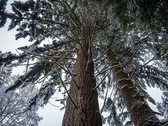 Leaves, Tree, Season, Foliage, Environment, Growth