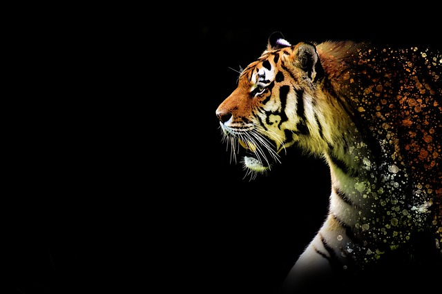 Tiger, Large, Discreet, Epic, Animal, Wildkatzte
