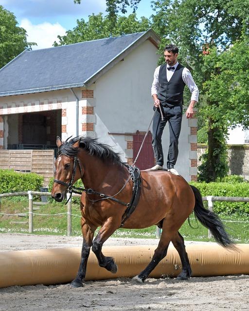 Horse, Aerobatics, Man, Acrobatics, Sport, Equestrian