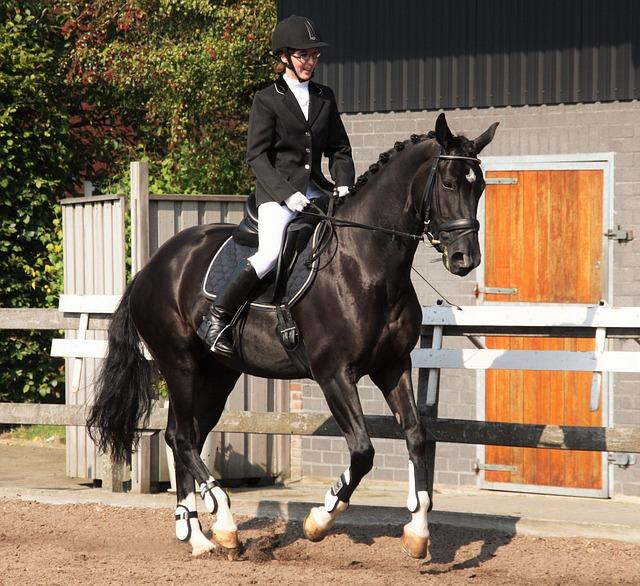 Dressage, Equestrian, Horsewoman, Horse, Rap, Gallop