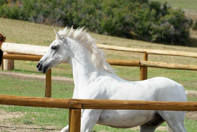 Farm, Horse, Animal, Stallion, Equine, Mane, Gelding