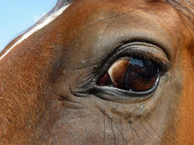 Eye, Horse, œil, Eyelashes, Look, Eyes, Equine