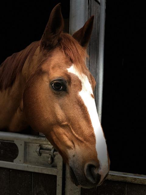 Horse, Head, Portrait, Listing, Animal, Equine