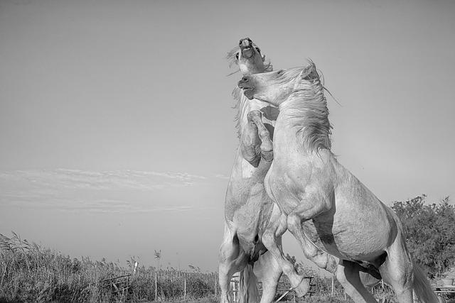 Cavalry, Mammal, Horse, Standard, Equine, Combat