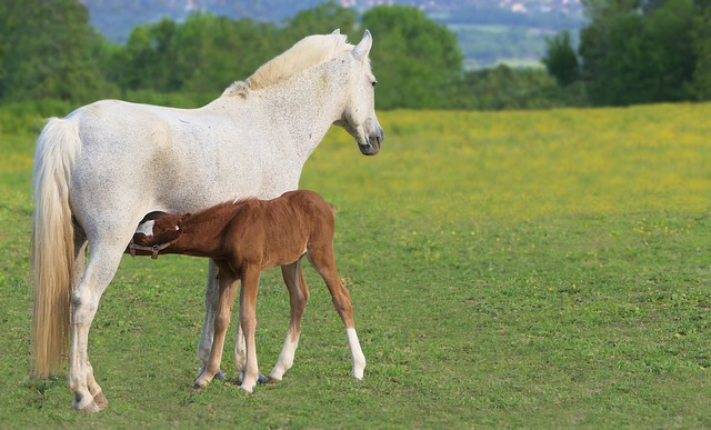 Foal, Brown, Drunk, Mom, Mare, White, Horse, Equine