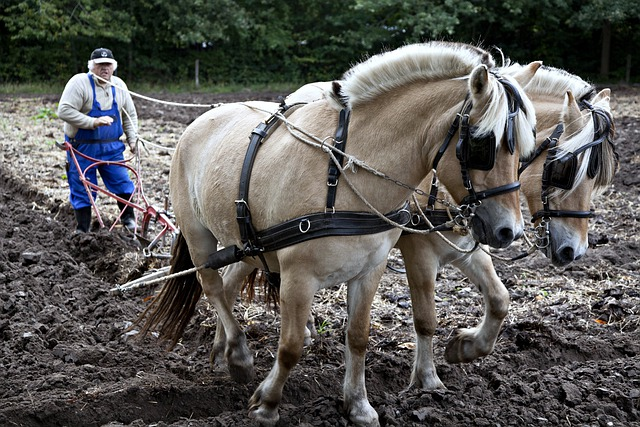 Horses, Plow, Plowing, Working, Equine, Nature, Outside