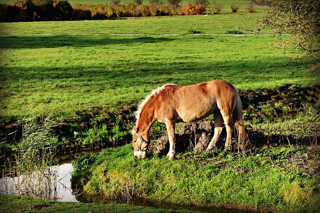 Pony, Horse, Animal, Mammal, Equine, Grazing, Pasture