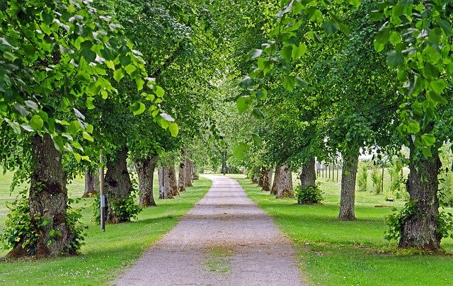 Old Linden Alley, Access Road, Gripsholm, Equipment