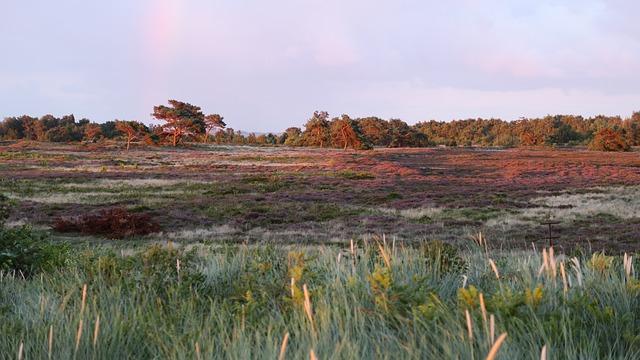 Heide, Bloom, Heather, Nature, Ericaceae, Mood