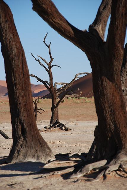 Tree, Forest, Desert, Africa, Etosha National Park