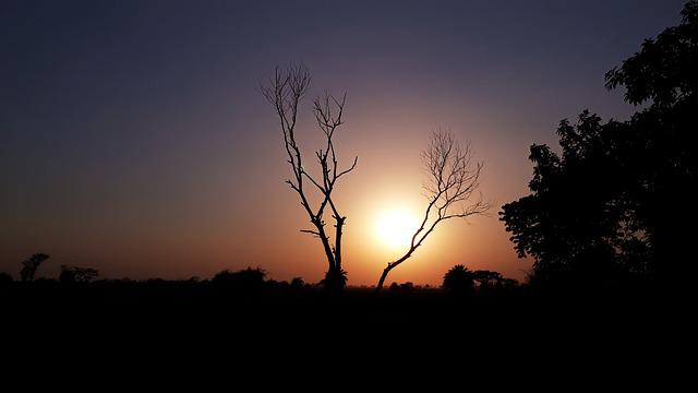 Sunset, Dawn, Nature, Tree, Dusk, Sky, Evening