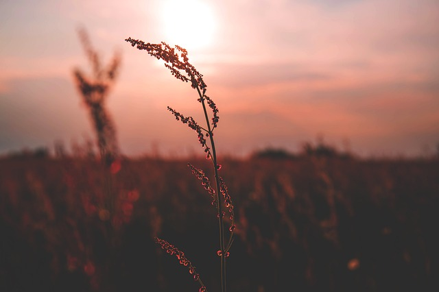Nature, Colorful, Evening, Field, Flowers, Grass