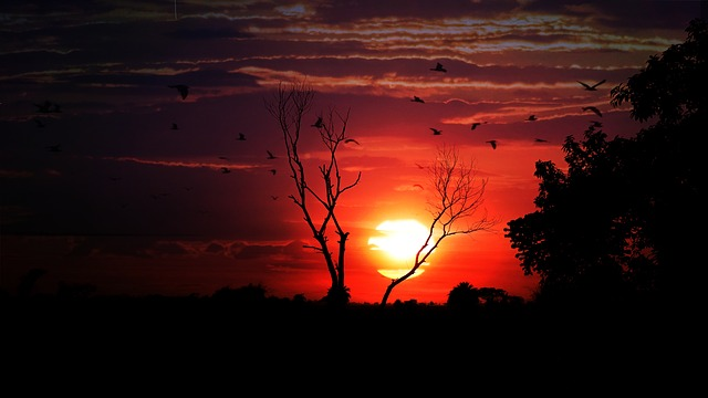 Sunset, Dusk, Dawn, Evening, Landscape, Sun, Nature