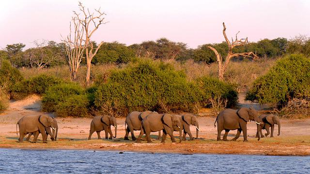 Botswana, Chobe, Elephant, Evening Light