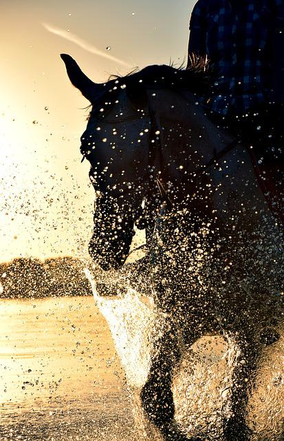Ride, Water, Horse, Sea, Sunset, Evening, Drip, Reiter