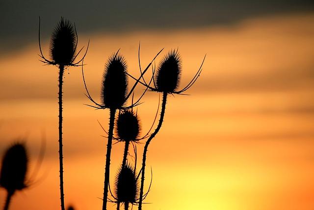 Sunset, Sky, Afterglow, Twilight, Evening Sky, Fiery